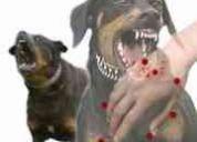 Mordedura de perro responsabilidad civil idemnizaciÓn-abogados asesoran lima perÚ