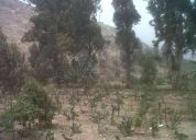 chosica 17 hectareas 999707019 http://mailto:borispa55@gmail.com