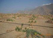 Ocasion, vendo terreno agricola con plantaciones de palta