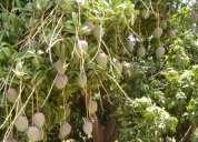 Vendo terreno agricola en chulucanas 45 has