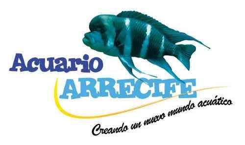 Acuario arrecife venta de peces ornamentales plantas for Acuarios de peces ornamentales