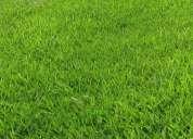 Vendo casa primera planta en los olivos