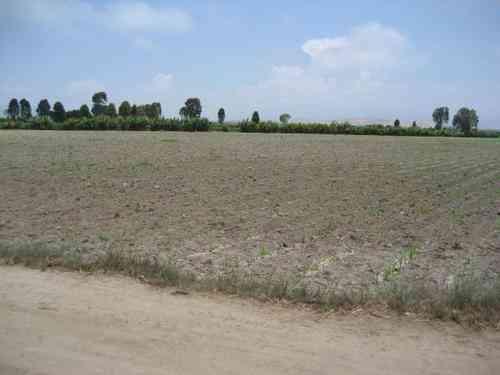 Terreno Agrícola Cañete Mamala  4.5754 Has.