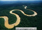 Unica pusanga peruana