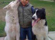 adiestramiento de perros a domicilio