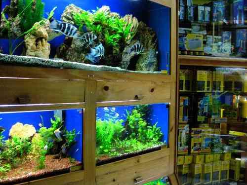 Fotos de acuario arrecife venta de peces ornamentales for Acuarios de peces ornamentales