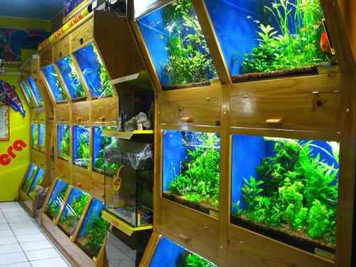 Fotos de acuario arrecife venta de peces ornamentales for Acuarios ornamentales