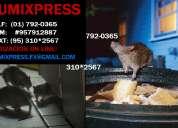 Empresa de desratización, desratización en lima, plagas de ratas, ratas en lima