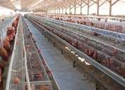 Vendo jaulas para gallinas ponedoras